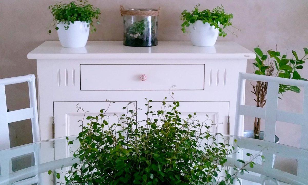 nature et salle manger bahut blanc et plantes vertes