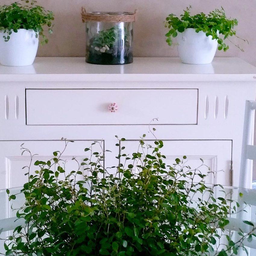 nature et salle à manger bahut blanc et plantes vertes